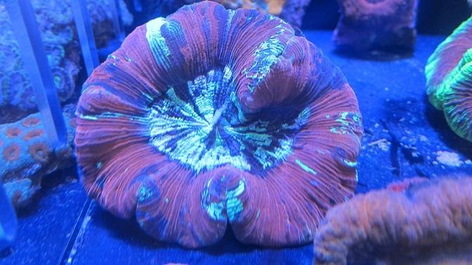 coral-lab blog-1211LPS2