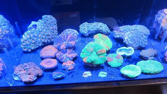 coral-lab blog-1211LPS3