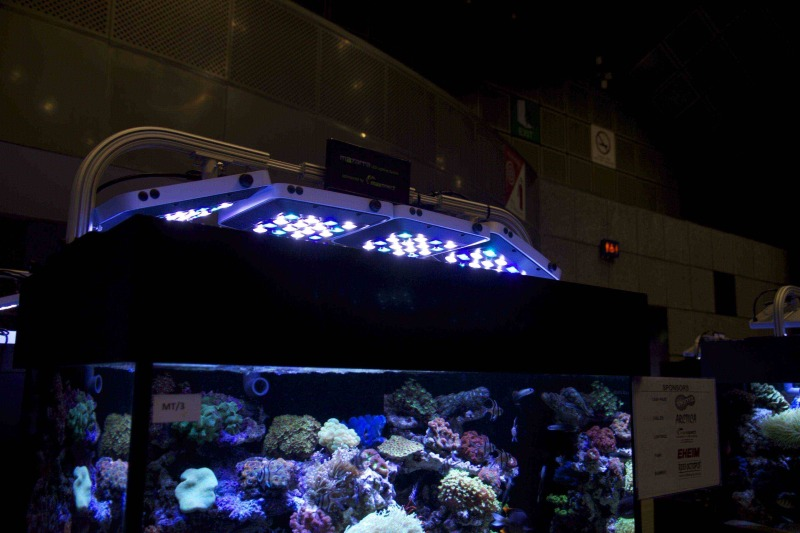 coral-lab blog-2011.10.10