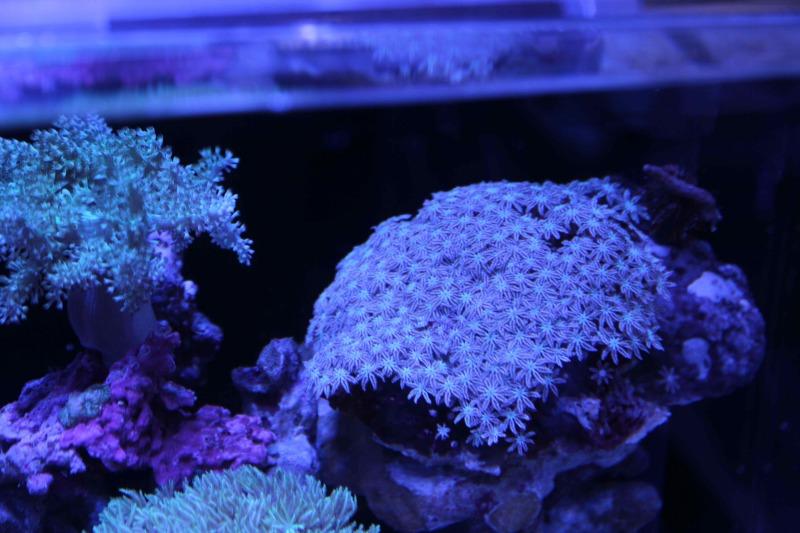 coral-lab blog
