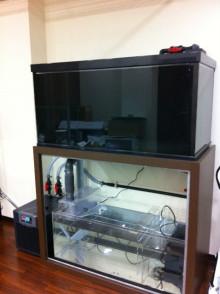 $coral-lab blog
