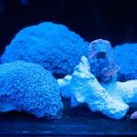 corallab20150810-04