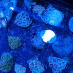 corallab20150810-05