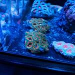 corallab20150810-06