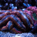 corallab20150810-13