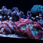 corallab20150810-14