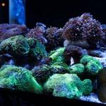 corallab20150810-15