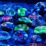 corallab20150810-17