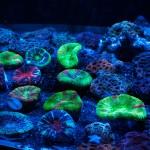 corallab20150810-21