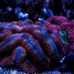 corallab20150810-23