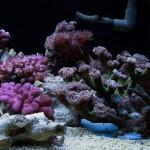 corallab20150810-24