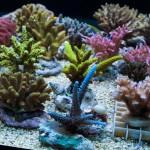 corallab20150810-29