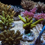 corallab20150810-30