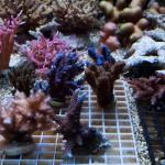 corallab20150810-31