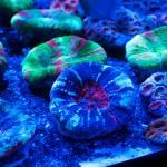 corallab20150810-33