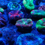 corallab20150810-34