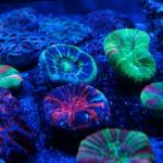 corallab20150810-35