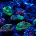 corallab20150810-36