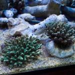 corallab20150810-40