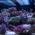 corallab20150810-43