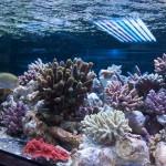 corallab20150810-44