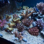 corallab20150810-45