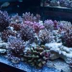 corallab20150810-50