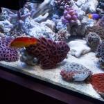 corallab20150810-62