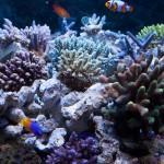 corallab20150810-63