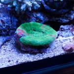 corallab20150810-66