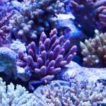 corallab20150810-69