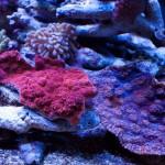 corallab20150810-78