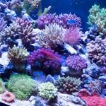 corallab20150810-79