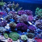 corallab20150810-80