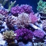 corallab20150810-84