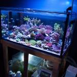 corallab20150810-85