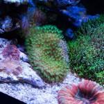 corallab20150810-86