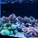 corallab20150810-88