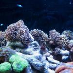 corallab20150810-89