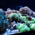 corallab20150810-90
