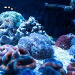 corallab20150810-91