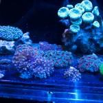 corallab20150810-92