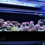 corallab20150810-97