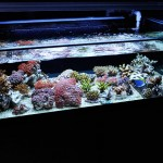 corallab20150810-98