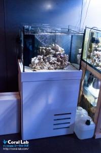 コーラルラボオリジナル オーバーフロー水槽(Labo-Rium60)特集 「水換え不要」「初心者でも珊瑚が簡単に飼育できる」
