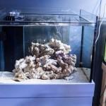 珊瑚が綺麗にレイアウトできる白いライブロック